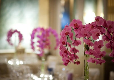 Claridges_Orchids_lr